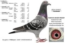 TSUNAMI  (Basic Breeding Hen)
