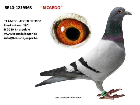 BICARDO